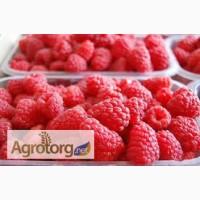 Агрокооператив продає свіжу малину