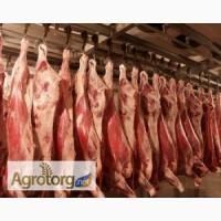 Мясо свинины обрезное на кости охлажденное в полутушах