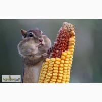 Закупим пшеницю, кукурузу и зерноотход(крупку)
