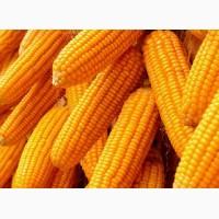 Кукуруза не гмо происхождение: Украина фоб порт Одесса