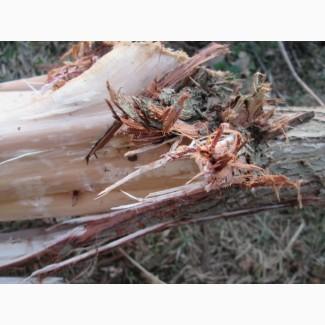 Кора можжевельника, Juniperus communis, эко натур