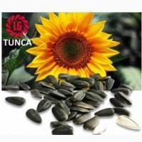 Семена подсолнечника Limagrain TUNCA / Тунка (США) Акция, Днепропетровская обл