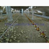 Вентиляция для птичника (бройлеров, индюков, несушок)