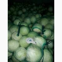 ТОВАгроБізнес ТСК реалізує капусту зимового сорту ЛЕКСИКОН 4.50 грн