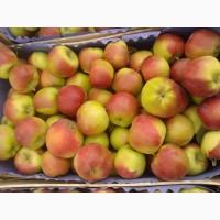 Яблоки летние Прима