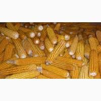 Закупаем кукурузу у сельхозпроизводителей ! Высокая цена