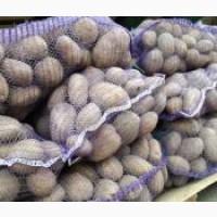 Реализуем картошку без гнили