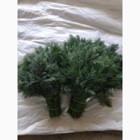 Укроп, Петрушка и другая свежая зелень из Мелитополя