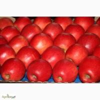 Продам яблоко украинское высшего качества от производителя
