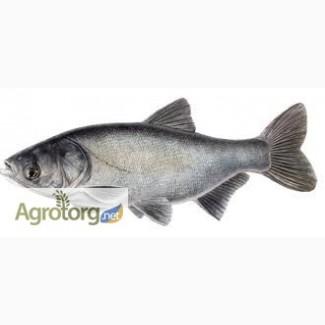 Покупаем без посредников оптом свежую и свежемороженую рыбу в ассортименте