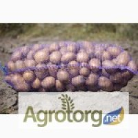 Продам насіннєва картопля