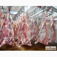 Мясо говядины на кости охлажденное