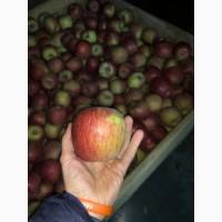 Продам яблука Фуджі, холодильник, Смарт-фреш