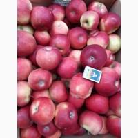 Продам яблука Айдаред малиновий 6, 5