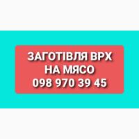 Заготівля Худоби Гайсин та сусідні райони)