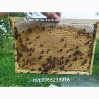 Бджолопакети карпатки+доставкою