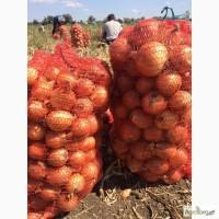 Продам херсонский лук от производителя