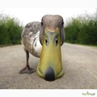 Мясо утки и фермерской курицы оптом