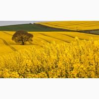 Принимаем сельхозпродукцию по всем регионам Украины (Рапс)