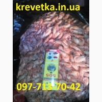 Крупная калиброванная креветка черноморская