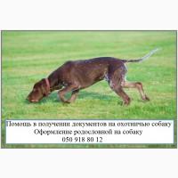 Как оформить собаку для охоты? Документы на право охоты с собакой