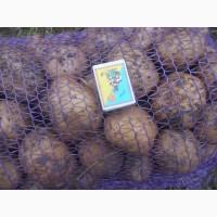 Продам продовольчу картоплю сіфра