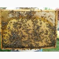 Бджолопакети КАРПАТКА 2021
