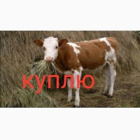 Куплю коз козлов цапов в любых количествах