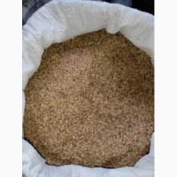 Продам насіння кульбаби лікарської (одуванчик)