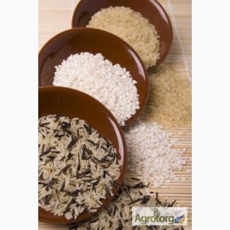 Продам рис оптом Украинский, импорт Пакистан