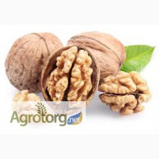 Продам орех грейкий чищеный и не