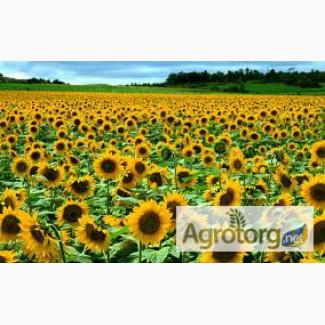 Закупаем семечку, кукурузу, сою, пшеницу по Винницкой обл