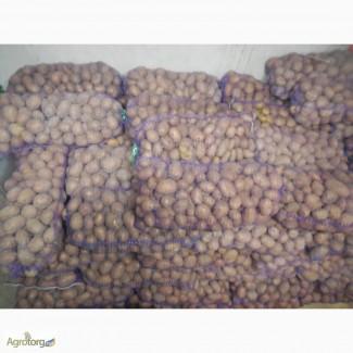 Продам картоплю ковель