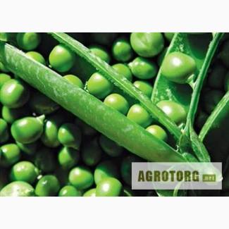 Семена гороха Свит 1репродукция (продам)