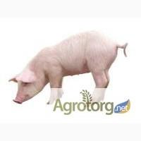 НОВИНКА! БВМД откорм 5% ТМ Стандарт агро премиум СП 19% для свиней от 30 до 110 кг