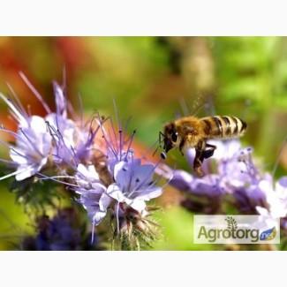 Майский мёд с разнотравьем, оптом 200кг по 65грн/кг