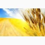 К У П Л Ю: зерновые (пшеницу, ячмень, кукурузу) и масличные культуры, Украина