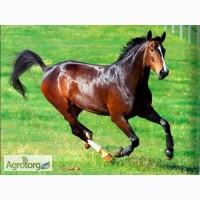 Кіньський перегній