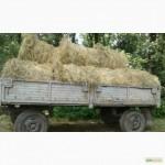 Продам сено луговое и люцерну, Киевская обл