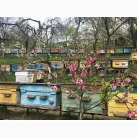ПРОДАМ Пчелопакеты Карпатка 2019г