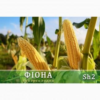 Семена сладкой кукурузы Фиона (Солодка Мрия) F1 Sh2 Мнагор, 20000, кукурудза