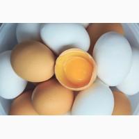 Продам яйца куриные от производителя. Крупный, мелкий опт