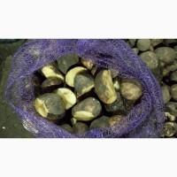 Продам резанную товарную картошку можно использовать для еды для посадки по 3 грн