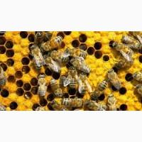 Медопродукти, бджоли, рої, вулики, відводки