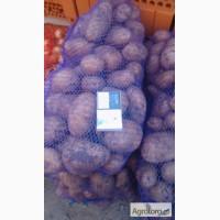Продам товарный картофель, сорт импала калибр6-11 в сетках 20 кг , Днепропетровск