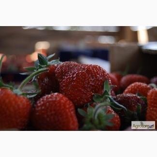 Продам клубнику урожая 2020 года