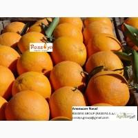Апельсины МАРОККО: Навель/ Вашингтон - СКИДКА / Марок Лэйт/ Салустиана - урожай 2016