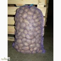 Картофель семенной Миранда