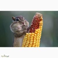 Семена Кукурузы монсанто и Семочк