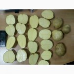 Продам качественный картофель оптом - на экспорт